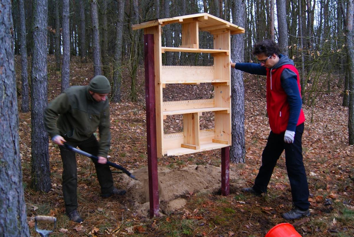 Pomagamy dzikim pszczołom